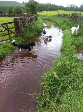 Church Court Cottages: Doggies enjoying the flooded footpath on one of their walks