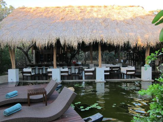 Uga Jungle Beach: bar