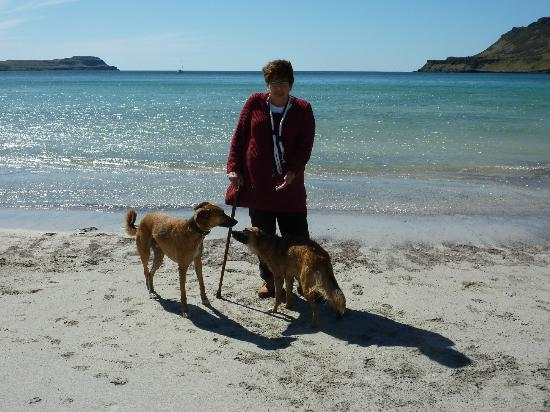 Calgary Bay : acres of sand for the dogs to run