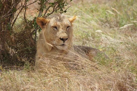 F. King Tours and Safaris - Day Tours: From our safari