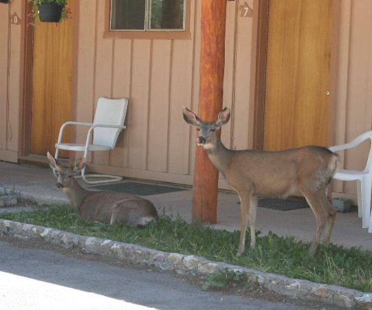 Red River, Nuevo Mexico: Wildlife at the Lodge