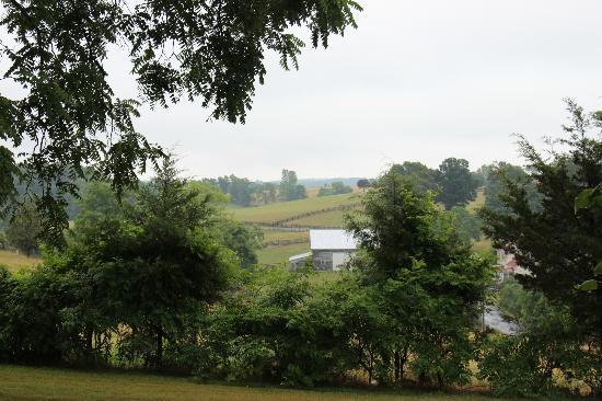 Piney Hill Bed & Breakfast: Vast fields
