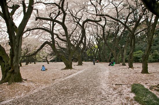 Shinjuku Gyoen National Garden: Peaceful ambience.