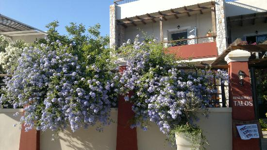 Talos Hotel Apartments: the garden in front of our apartement