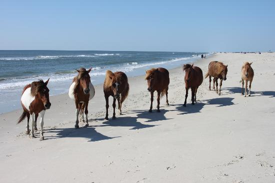 Assateague Island National Seashore Campground : Posing for the camera