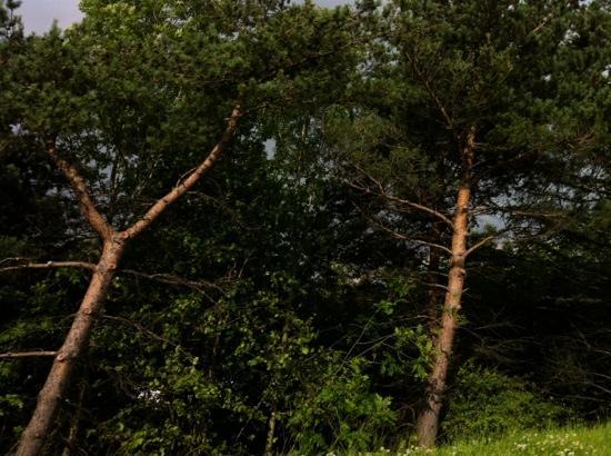 Zip World Fforest : treetops