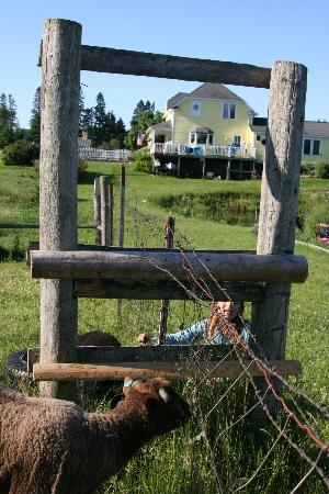 Sandtown Farmhouse Bed and Breakfast: view from sheep corral