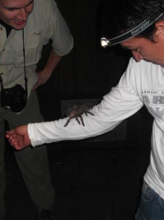 Amazonia Expeditions' Tahuayo Lodge: One giant Tarantula!