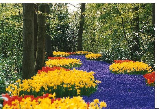 Bloemen in lisse
