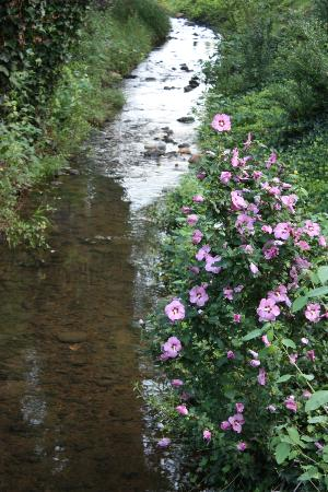 Brookside Mountain Mist Inn: Brook in front of property