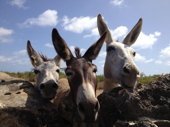 donkey sanctuary - Picture of Donkey Sanctuary Bonaire, Bonaire ...