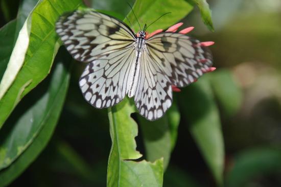 Butterfly Sanctuary at Mambukal Resort: Mumbukal Butterfly house
