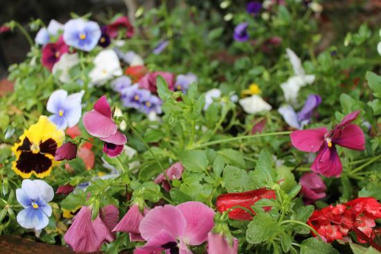 Hotel Villa Carlotta: spring blooms