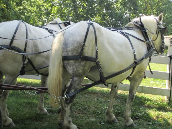 Shaker Village of Pleasant Hill - The Inn: Huge horses
