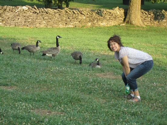Shaker Village of Pleasant Hill - The Inn: Canadian geese
