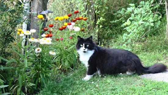 Aultmore Hollow: Nellie the cat