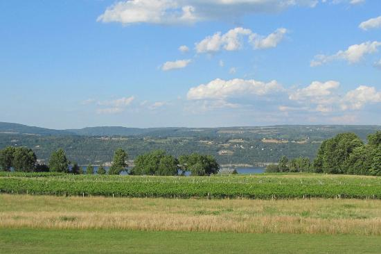 View of vineyard and Seneca Lake from Castel Grisch