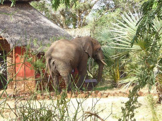 Elephant in Leopard Rock Lodge