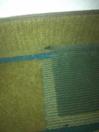 La Quinta Inn Austin Oltorf : theres no luck in a dead cricket