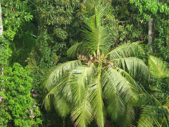 Kandy View Hotel: It cannot get greener...
