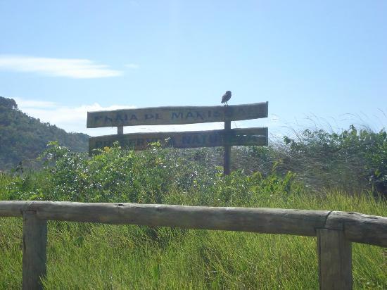 Bombinhas: Praia de Mariscal e sua coruja. 