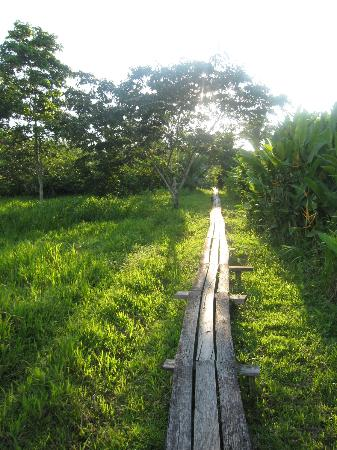 Cotton Tree Lodge: pathways into the jungle