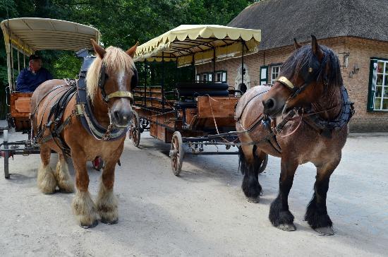 Genk, Belgium: huifkar met boerenpaarden.