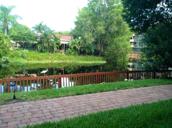 Park Shore Resort: Hotel Grounds