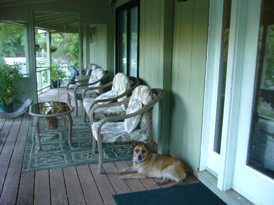 Trinity River Adventure Inn River Lodging: Doggy on porch
