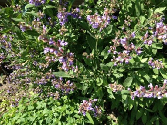 Graether Gesundheitsresort: frische Kräuter-eigene bio Ernte