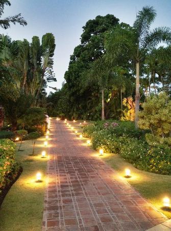 أوكسيدنتال إل إمباجادور: Hotel gardens