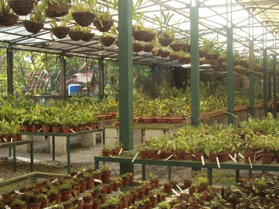 Cartago, Kostaryka: One of the collection rooms at the botanical garden