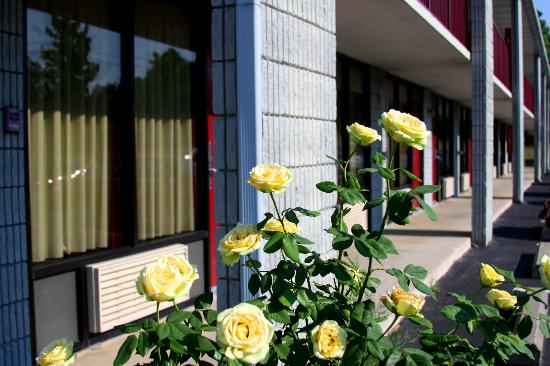 Branson Yellow Rose Inn and Suites: Yellow Rose Inn
