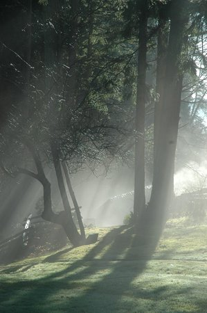 Hastings House Country House Hotel: Morning mist