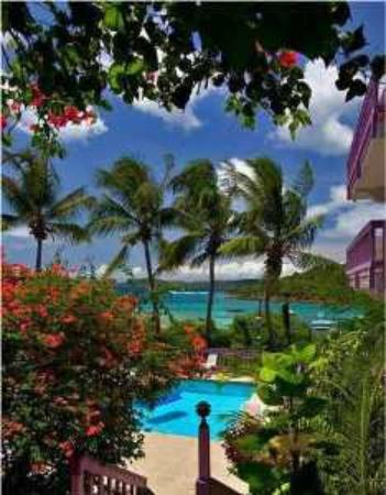 Lavender Hill Suites: Lavender Hill Pool and Views