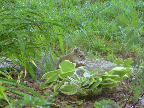 Deerhill Inn: squirrel