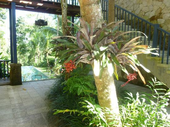 Taman Bebek Resort & Spa: blooming Bromeliads