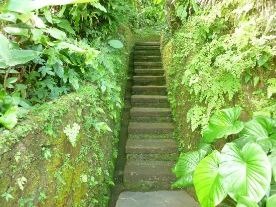 Taman Bebek Resort & Spa: stairs to the garden
