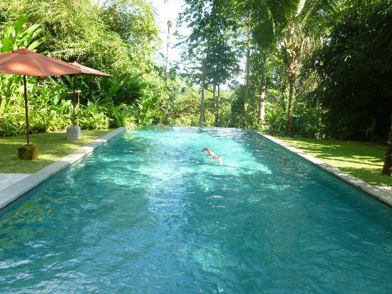 Taman Bebek Resort & Spa: infinity edge lap pool