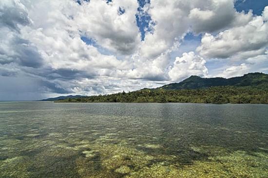 The 4 Fish : Bunaken Marine Park