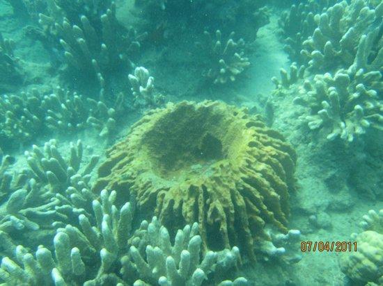 Corals of Tambangin Polillo Quezon  Picture of Polillo Island