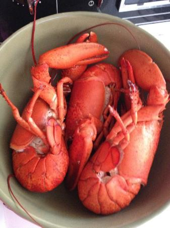 Montague River Cottages: Canner lobsters I cooked in the cottage straight from the lobsterman in the wharf $20 for 4
