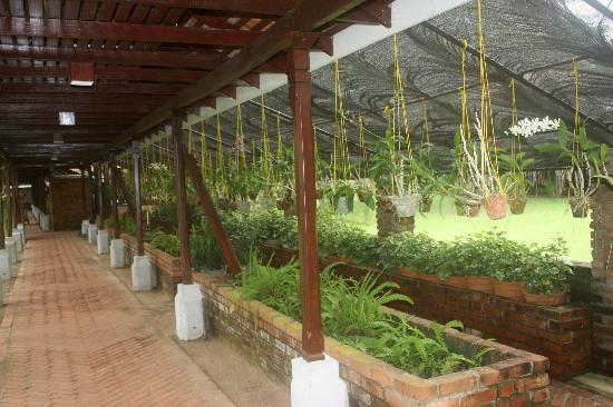 Club Villa: L'accès réception - restaurant