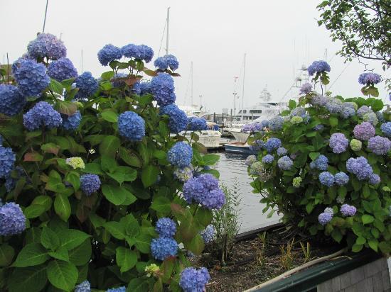 Bowen's Wharf 사진