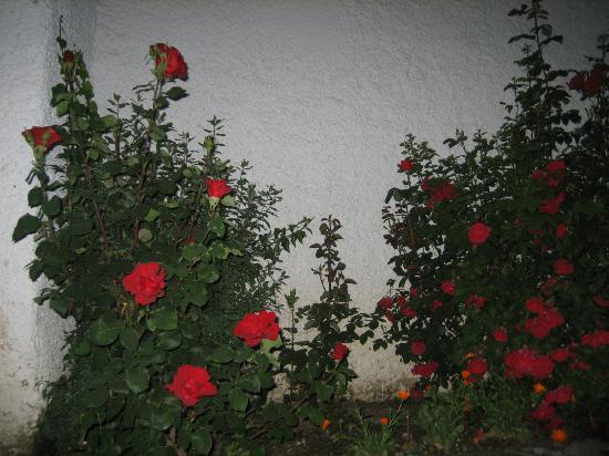 Hotel Villa de Bubion: Flores del os jardines 