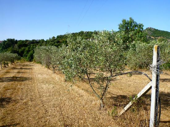 Agriturismo Li Scopi : They have olive orchards