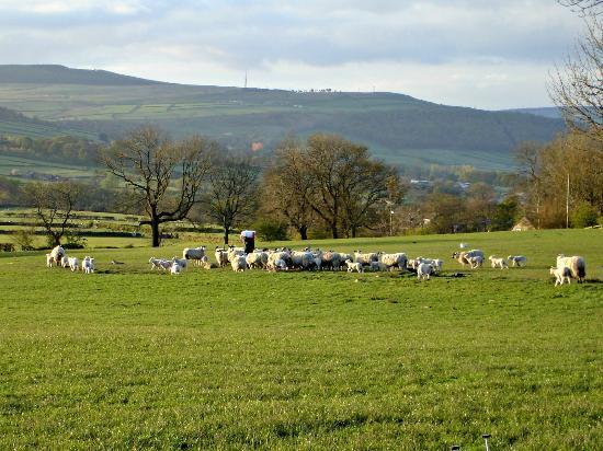 Pickersgill Manor Farm Bed and Breakfast : Marcus feeding the sheep