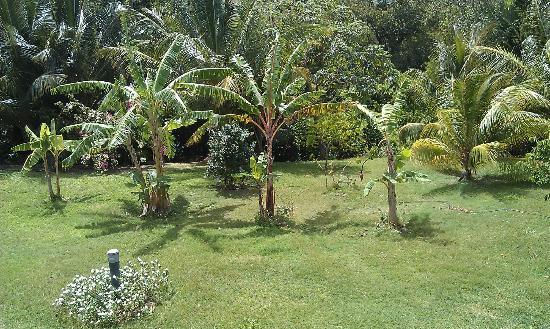 Residence Hoteliere Les Cayalines: un apercu de jardin