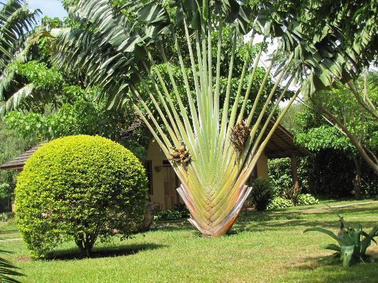 Arumeru River Lodge: Prachtvoller Garten