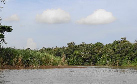 pygmy elephant - Picture of Kinabatangan River, Sabah ...